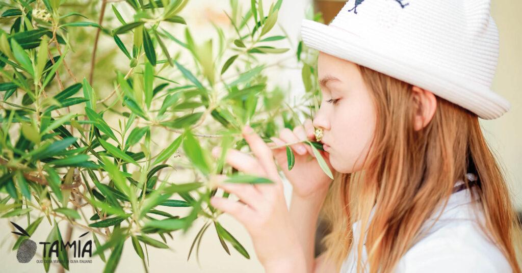 Odorare i fiori di olivo